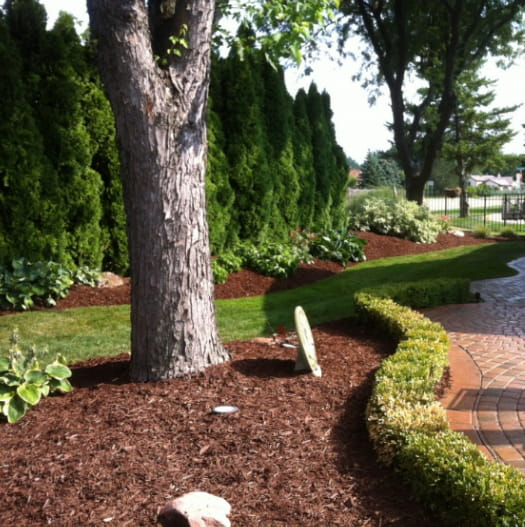 Residential Lawn Maintenance Services in Macomb County MI  - residential-content-image-tree